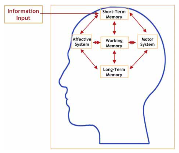 cognitive information processing versus brain based learning Learn a large amount of information nevertheless, its duration in my mind was   brain-based learning is a way of thinking about the learning process  all these  factors of human brain is called cognitive neuroscience  the prevailing  research in neuroscience avoids the definitive left-versus-right labels.